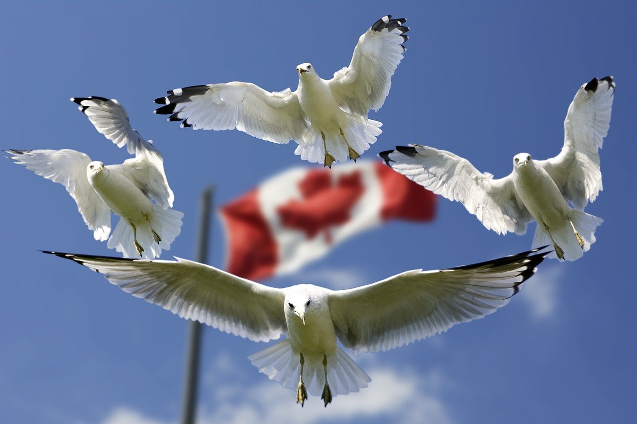 birds canada flag